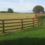 macdonald-post-and-rail-fencing-horsley