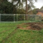 te-Tree-Protection-in-Surrey