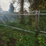 Tree-Protection-in-Surrey